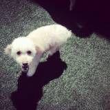Onde achar Daycare para cães no Aeroporto