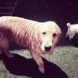 Onde achar Daycare para cão  em Perdizes