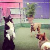 Onde achar hospedagem de animais na Vila Mariana
