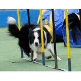 Onde achar hotéis de cachorro no Campo Limpo