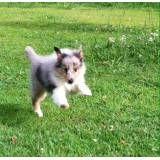 Onde achar hotéis de cachorros no Brooklin