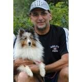 Onde achar hotéis de cães na Água Branca