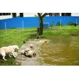 Onde achar hotéis para cachorros no Jardim Europa