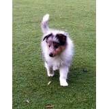 Onde achar hotéis para cães na Vila Leopoldina