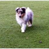 Onde achar hotéis para cão no Sacomã