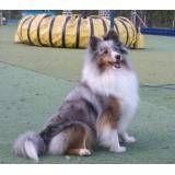 Onde achar hotel de cão em Itapevi