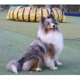 Onde achar hotel de cão no Jardim América