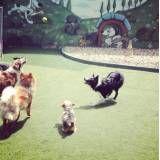 Onde achar hotel para animais no Jabaquara