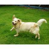 Onde achar hotel para cachorros no Butantã