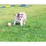 Onde achar hotel para cães no Jardim Bonfiglioli