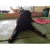 Onde adestrar cães em Interlagos