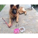 Onde encontrar adestrador para cão no Jardim Bonfiglioli