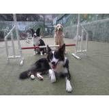 Onde encontrar adestradores para cachorro em Santo Amaro