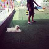 Onde encontrar adestradores para cachorro na Cidade Jardim