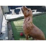 Onde encontrar adestradores para cachorro no Pacaembu