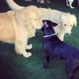 Onde encontrar adestradores para cães no Jaguaré