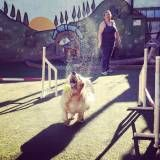 Onde encontrar adestramento de cães na Pedreira