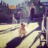Onde encontrar adestramento de cães no Sacomã
