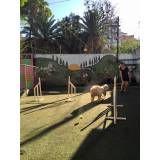 Onde encontrar adestramento para cachorros no Pacaembu