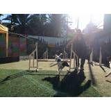 Onde encontrar adestramento para cão no Pacaembu