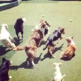 Onde encontrar creche de cachorros em Taboão da Serra