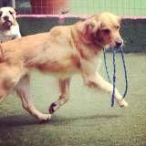 Onde encontrar creche para cachorro em Jandira