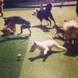 Onde encontrar creche para cães em Cotia