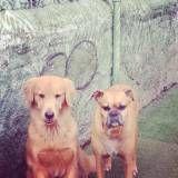 Onde encontrar creche para cão no Ipiranga