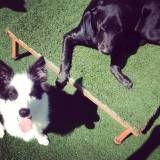 Onde encontrar creches de cachorro no Socorro