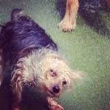Onde encontrar creches de cachorros no Socorro