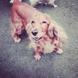 Onde encontrar Daycare canino em Cotia