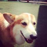 Onde encontrar Daycare de cachorro no Jardim América