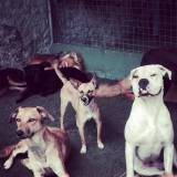 Onde encontrar Daycare de cães na Cidade Ademar