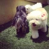 Onde encontrar Daycare para cachorro no Jardim América