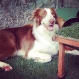 Onde encontrar Daycare para cachorros no Jardim América