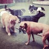 Onde encontrar Daycare para cão  no Aeroporto