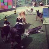 Onde encontrar hospedagem para animais em Raposo Tavares
