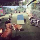 Onde encontrar hospedagens para animal  na Pedreira