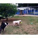 Onde encontrar hotéis de cachorro no Sacomã