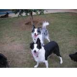 Onde encontrar hotéis de cachorros em Pinheiros
