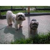 Onde encontrar hotéis de cães em Osasco
