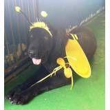 Onde encontrar hotéis para cachorros na Vila Sônia