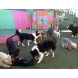 Onde encontrar hoteizinhos de cachorro  na Cidade Dutra