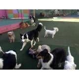 Onde encontrar hoteizinhos de cachorros  no Jardim Bonfiglioli