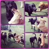 Onde encontrar hoteizinhos de cão em Moema