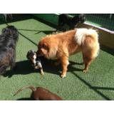 Onde encontrar hoteizinhos para cachorro  no Jardim Bonfiglioli