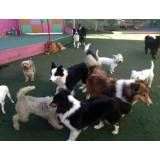 Onde encontrar hoteizinhos para cachorros  em Cajamar