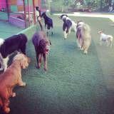 Onde encontrar hoteizinhos para cães  na Cidade Ademar