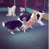 Onde encontrar hoteizinhos para cão  em Perdizes