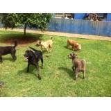 Onde encontrar hotel de cachorro na Vila Leopoldina